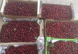50-kg-de-cerises-ont-ete-ramassees-samedi-et-jeudi ecureuils